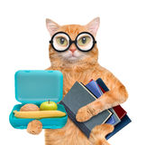 Cat with books and school lunch box. Stock Image