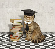 Cat and books. Royalty Free Stock Photography