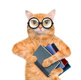 Cat with books. Royalty Free Stock Photos