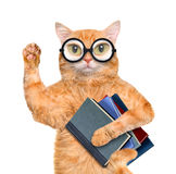 Cat with books. Royalty Free Stock Photography