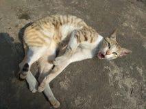 Cat& x27; boos s stock fotografie