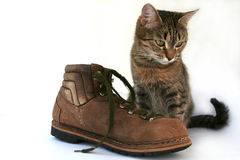 Cat and boot Royalty Free Stock Photos