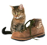 Cat and boot Royalty Free Stock Image