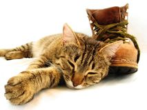 Cat and boot. Brown cat and brown boot Royalty Free Stock Photography