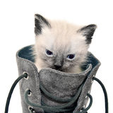 Cat in boot Royalty Free Stock Photography
