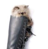 Cat in Boots - Himalauan cat in combat boot Royalty Free Stock Photo
