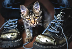 Cat and boots Royalty Free Stock Photos