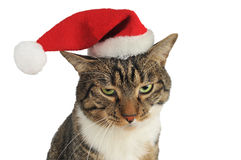 Cat bored with christmas hat Stock Image