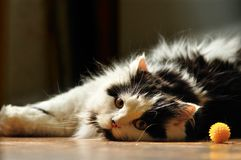 Cat boring Royalty Free Stock Photos