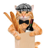 Cat with a bottle of wine and bread. Royalty Free Stock Image