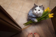 Cat with a bouquet at the feet of mistress Royalty Free Stock Photography