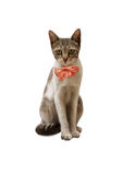 Cat with bow Royalty Free Stock Photo