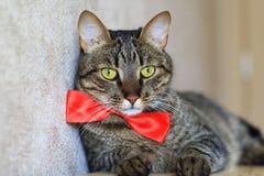 Cat in bow tie Stock Image
