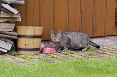 Cat With Bowl Royaltyfri Foto