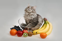Cat in bowl with fruit Stock Photo