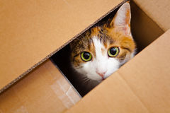Cat in a box Stock Photos