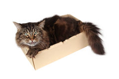 Cat in a box. Close-up Royalty Free Stock Photography