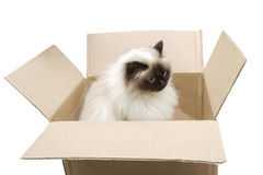 Cat in a box Royalty Free Stock Photo