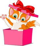 Cat_box Fotografia Stock