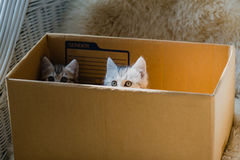 Cat in the box Stock Image