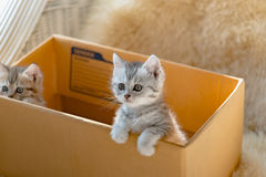 Cat in the box Stock Images