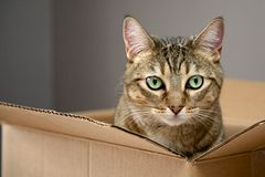 Cat in a box Stock Photo