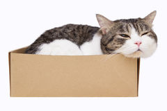 Cat in box. Domestic cat sleep in box on white background Stock Image