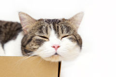 Cat in box Royalty Free Stock Images