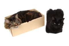 Cat in a box with friend. Close-up Royalty Free Stock Image