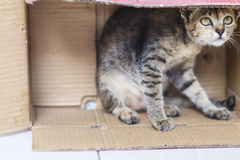 Cat in a box Stock Image