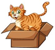 A cat in the box. Illustration stock illustration