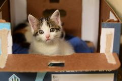 Cat in the box. Cat just woke up and she's staring at me Royalty Free Stock Photography