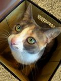 Cat in the box Stock Photos
