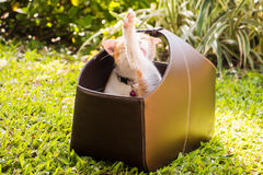Cat in a box Stock Images