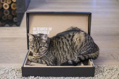 Cat in a box. Cat relaxing in a box Stock Photo
