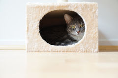Cat in box shaped hideaway Stock Photography