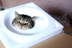 Cat on the box Royalty Free Stock Photo
