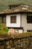 Cat in Bozenci, Bulgaria Royalty Free Stock Image