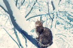 Cat on the branch Stock Photos