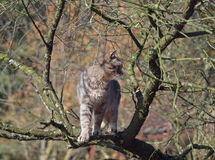 Cat on branch of tree Royalty Free Stock Image
