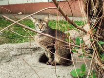 Cat in the branches Stock Photography