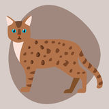 Cat breed bengal leopard cute pet brown fluffy leopard adorable cartoon animal and pretty fun play feline sitting mammal. Cat breed cute leopard pet brown fluffy Stock Images