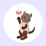 Cat breed cute kitten brown pet portrait fluffy young adorable cartoon animal and pretty fun play feline sitting mammal Stock Image