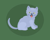 Cat breed cute kitten gray pet portrait fluffy young adorable cartoon animal and pretty fun play feline sitting mammal Stock Photo