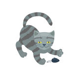 Cat breed cute kitten gray pet portrait fluffy young adorable cartoon animal and pretty fun play feline sitting mammal Royalty Free Stock Images