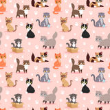 Cat breed cute kitten pet portrait fluffy young adorable cartoon animal vector illustration seamless pattern Royalty Free Stock Photos