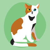 Cat breed cute pet portrait fluffy white black red adorable cartoon animal and pretty fun play feline mammal domestic Royalty Free Stock Photos