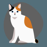 Cat breed cute pet portrait fluffy white black red adorable cartoon animal and pretty fun play feline sitting mammal Stock Photography