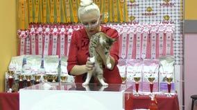 Cat breed Maine Coon. Orenburg, Russia - 10 October 2015: Cat breed Maine Coon at the exhibition stock video