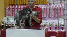 Cat breed Maine Coon. Orenburg, Russia - 10 October 2015: Cat breed Maine Coon at the exhibition stock footage